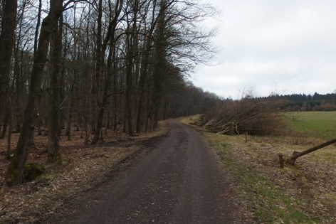 Schwarzer_Weg_3